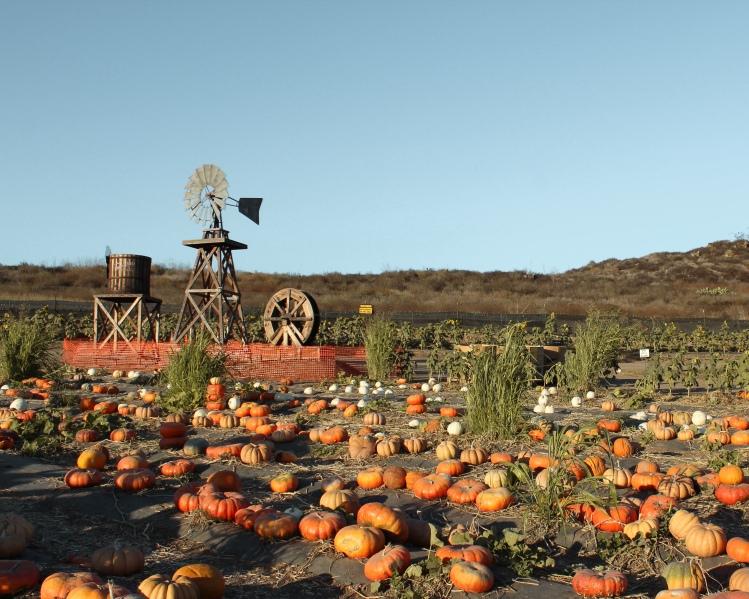pumpkin27